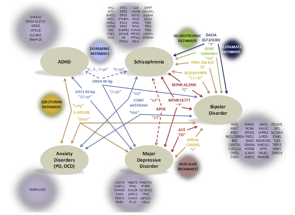 Genes implicated in the five mental illnesses studied. The common genes between illnesses are in the centre of the diagram with arrows to show the related illnesses, and are grouped by colour to designate common functions in the brain.